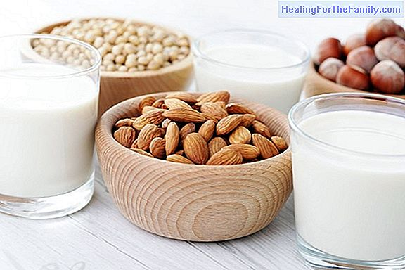 Milk substitute foods for children with lactose intolerance