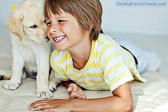 Pets, children's best friends