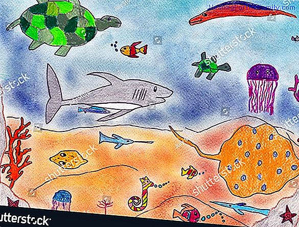 Children's drawings of marine animals. How to draw a dolphin
