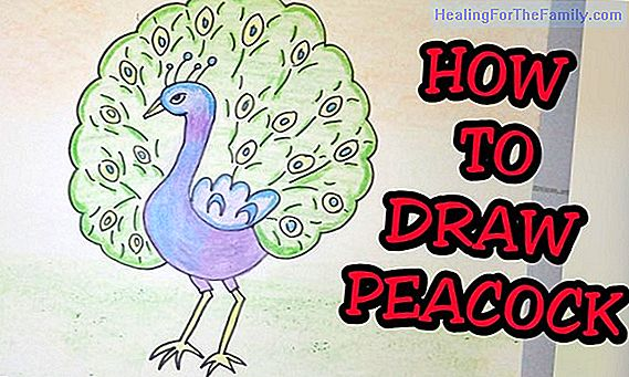 How to make a drawing of a bird step by step