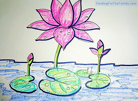 How to draw a lily cove. Flower drawings for children