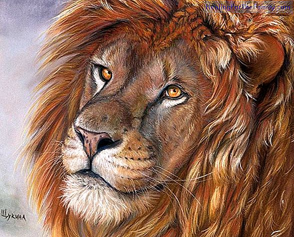 How to draw a lion. Animal drawings for children