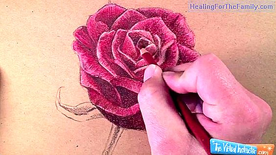 How to do, step by step, a drawing of a carnation