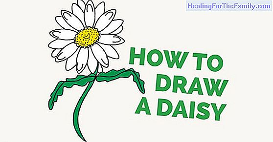 How to make, step by step, a drawing of a daisy