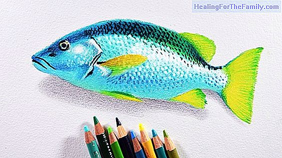 How to make, step by step, a drawing of a fish