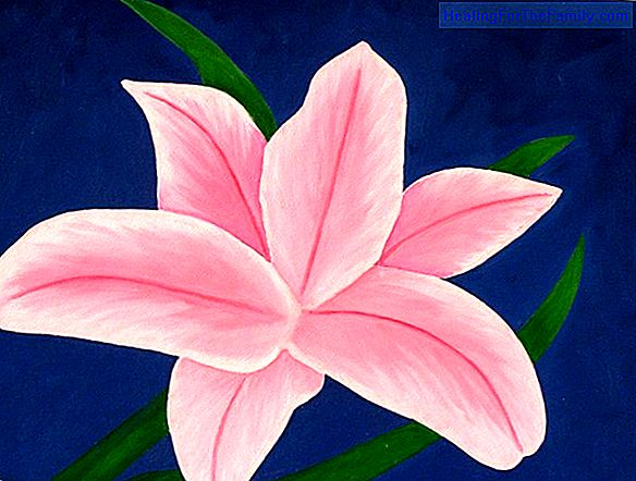 How to do, step by step, a drawing of a water lily