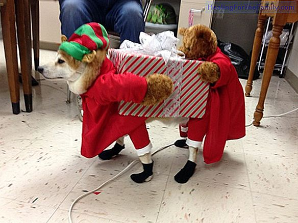 Santa Claus homemade costume. Christmas crafts