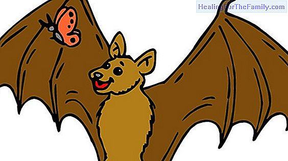 The bat and the weasels. Fable on how to adapt to the circumstances for children