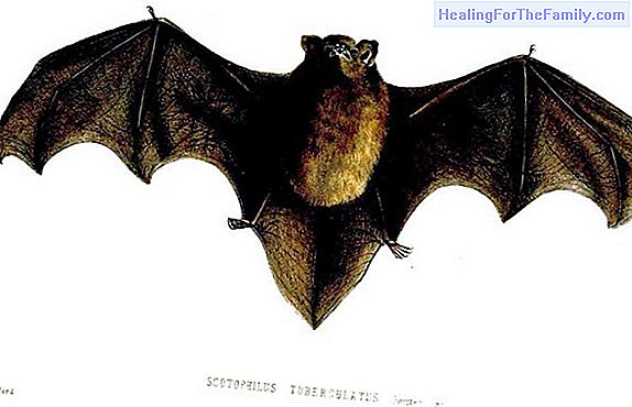 The bat. Short Mexican Tales