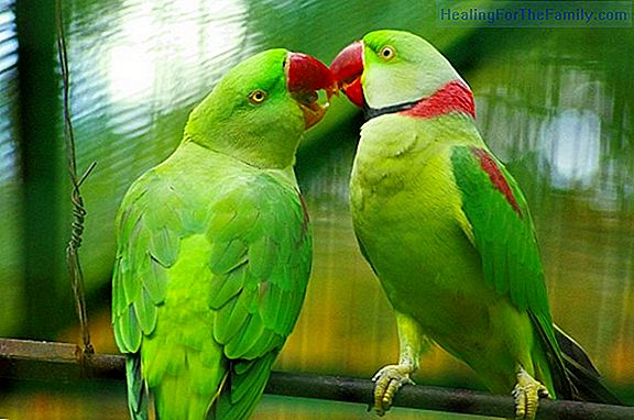 The parrots in disguise. Legend of Ecuador for children